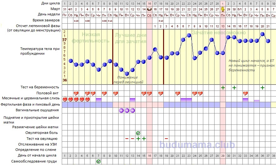 График базальной температуры от начала цикла до беременности