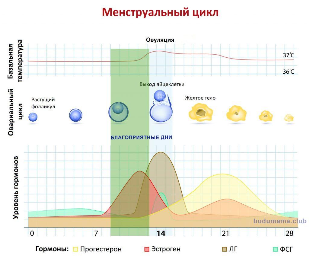 График благоприятных дней в менструальном цикле