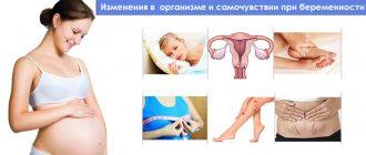Изменения в организме и самочувствии беременной женщины