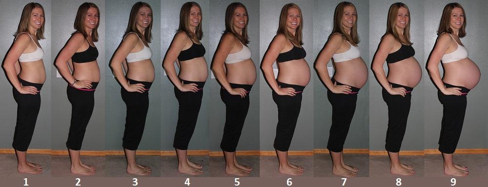 Рост живота с 1 по 9 месяц беременности