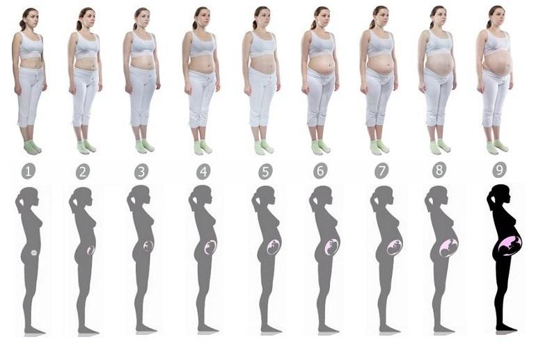 Картинки беременность по месяцам