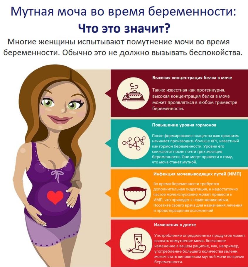 Причины мутной мочи при беременности
