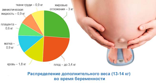 Распределение дополнительного веса при беременности